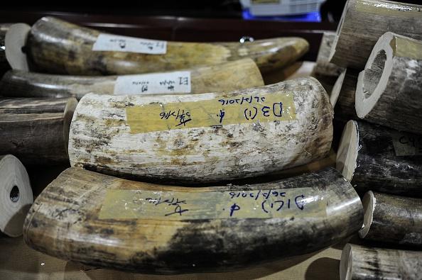 tusks wildlife day