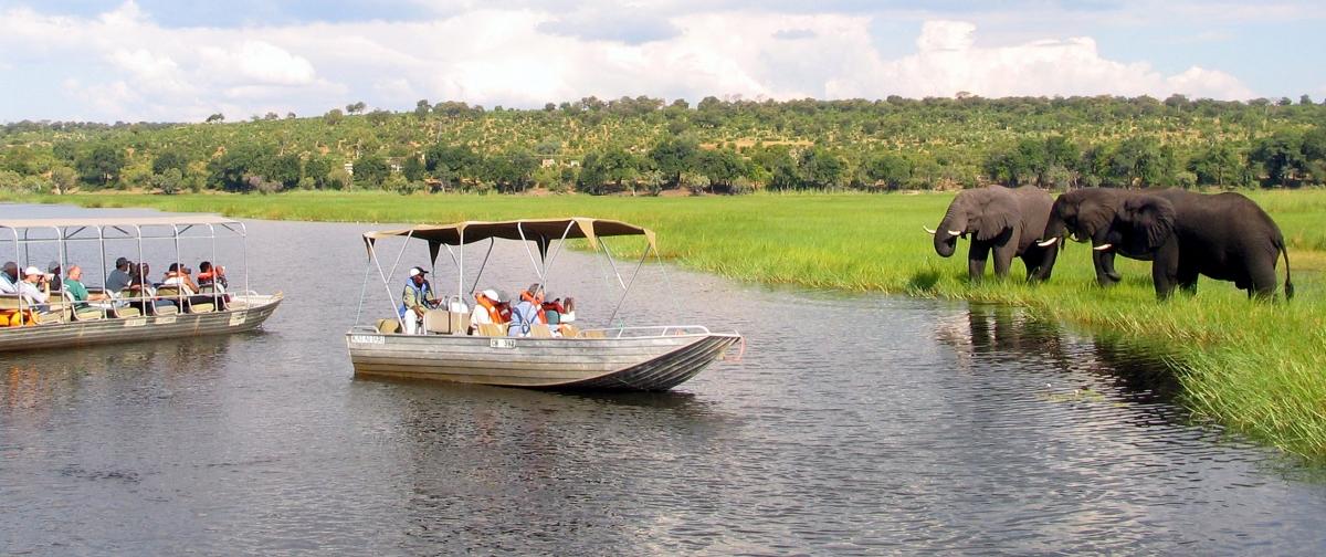 elephants chobe national park