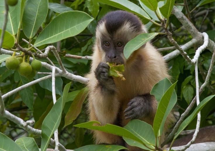 world wildlife day ecotourism