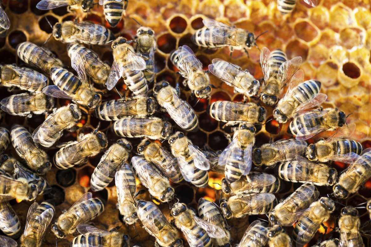 Afbeeldingsresultaat voor boys charged killing half a million bees