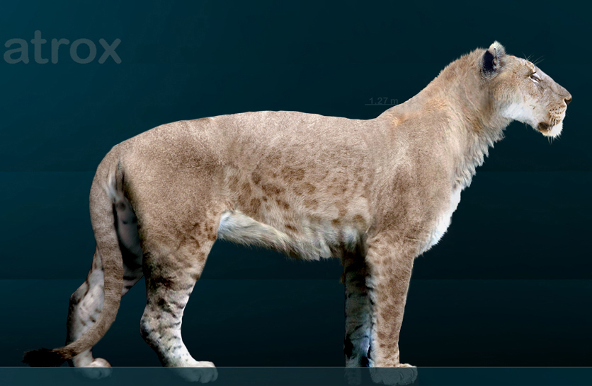 American Cave Lion