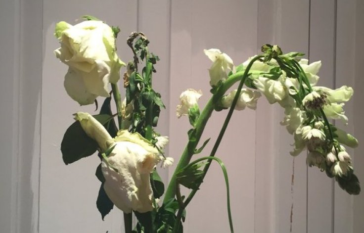 Moonpig Delivers Broken Flowers And A Tree Instead Of A Plant In