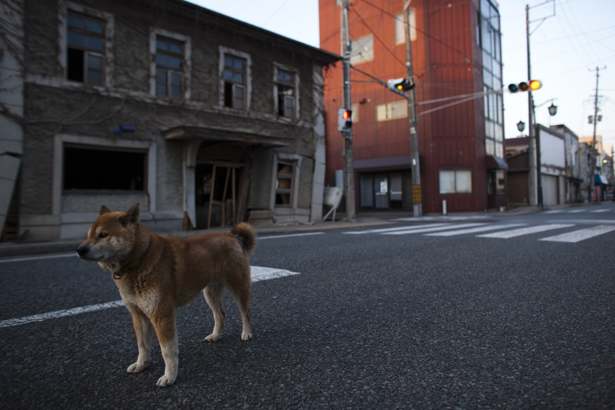 abandoned dog fukushima exclusion zone