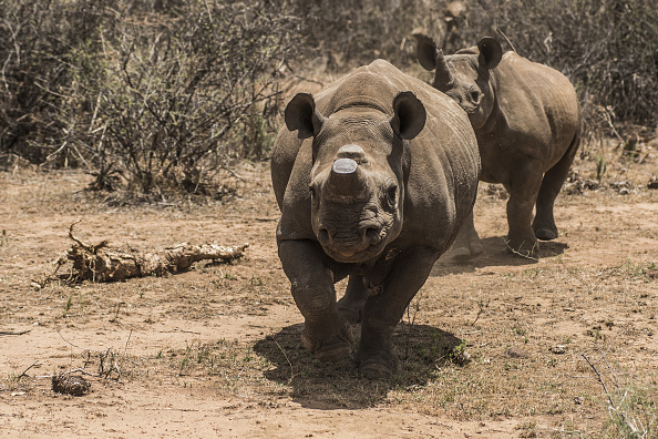 rhino farm