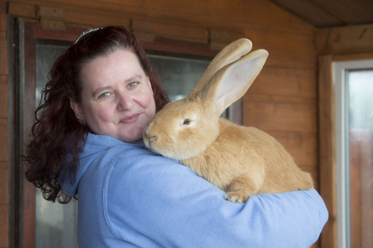 atlas the giant rabbit with new owner
