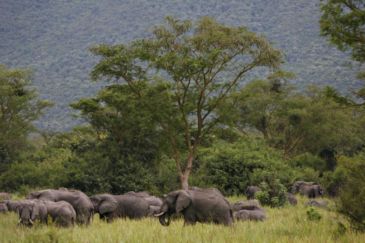 Virunga elephants