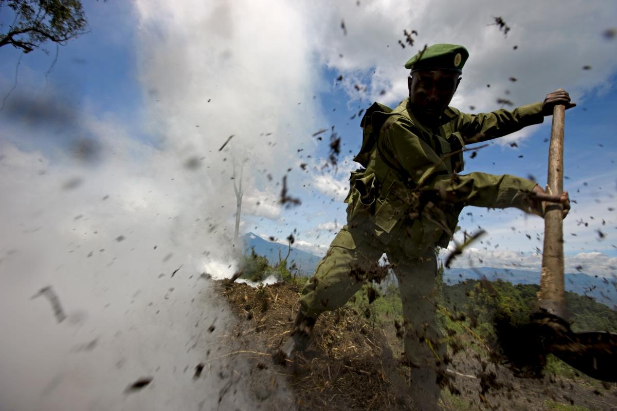 Virunga illegal charcoal