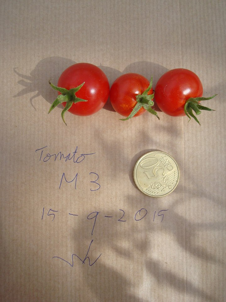 mars tomatoes