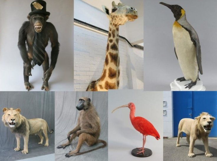 chimp in top hat and giraffe among 100k stuffed animals stolen from