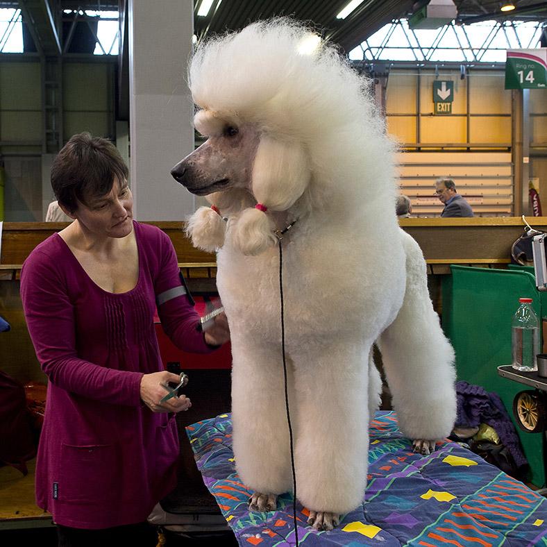 Poodle show channel 4