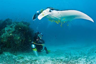 Underwater Photography Masterclass by Alex Mustard