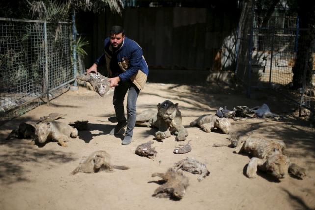 Gaza zoo animals