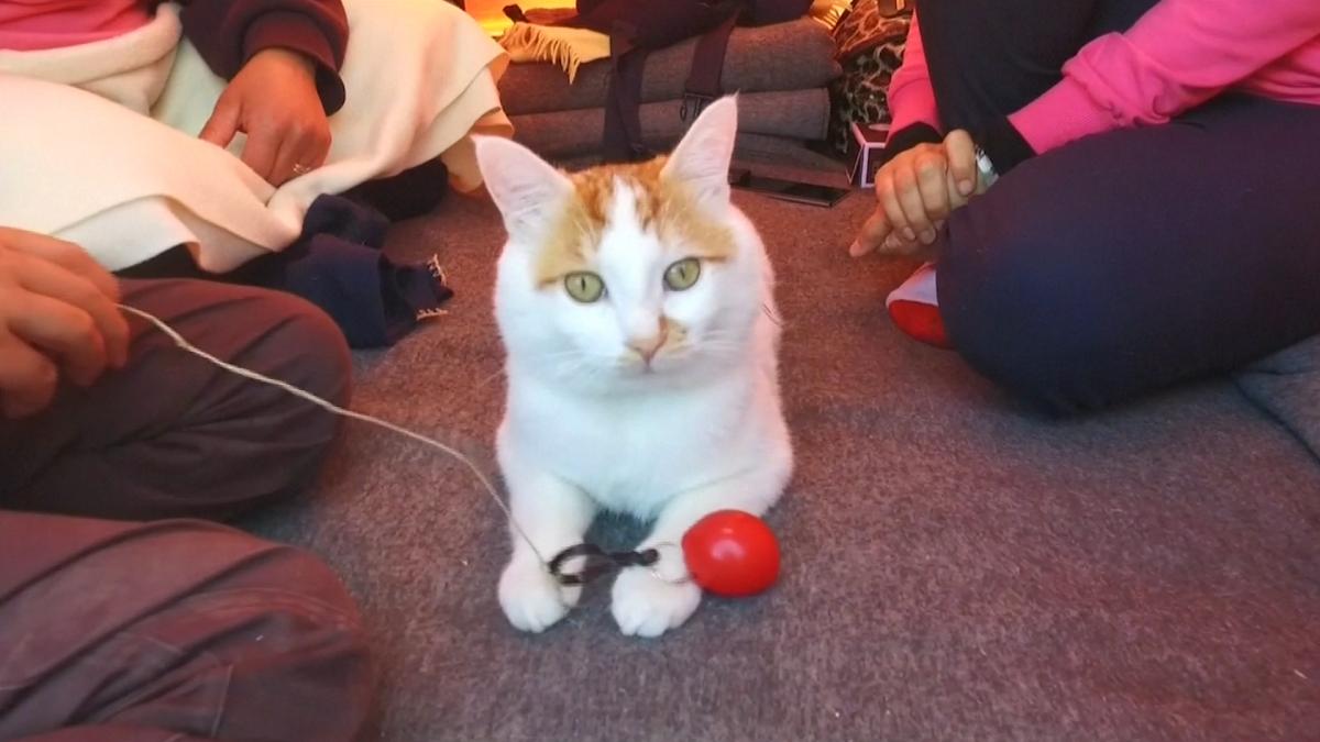 Kapoush the cat