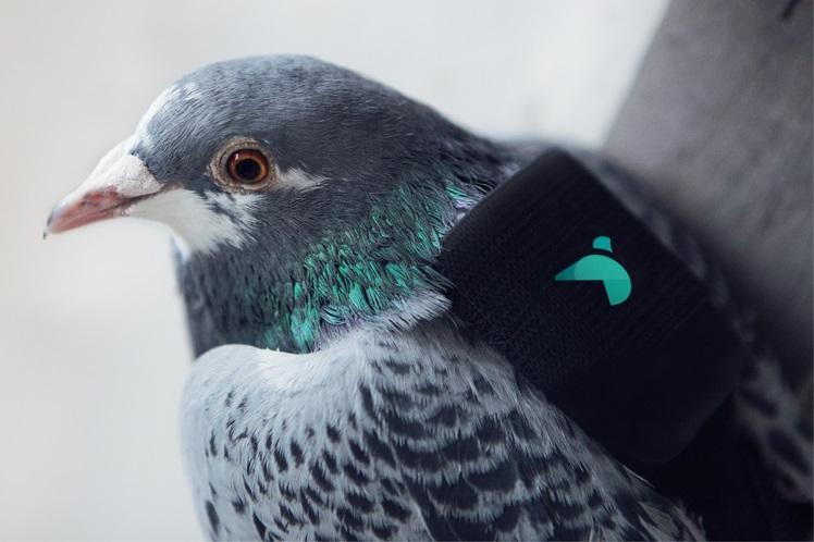 pigeon air patrol london pollution