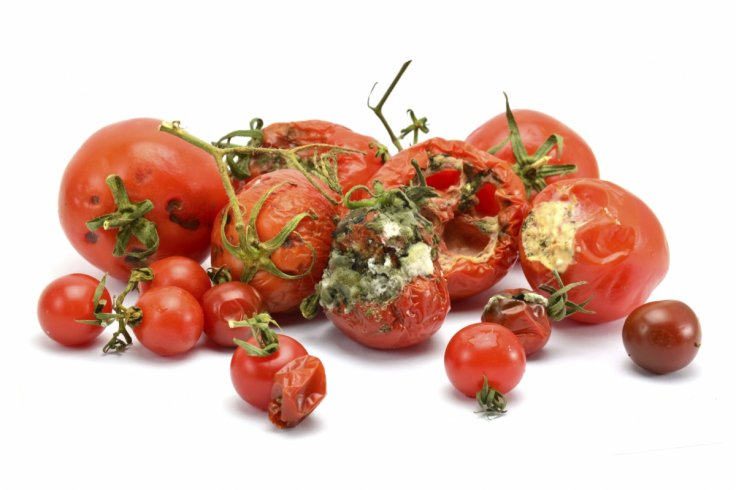 renewable energy rotten tomatoes turned into electricity by scientists