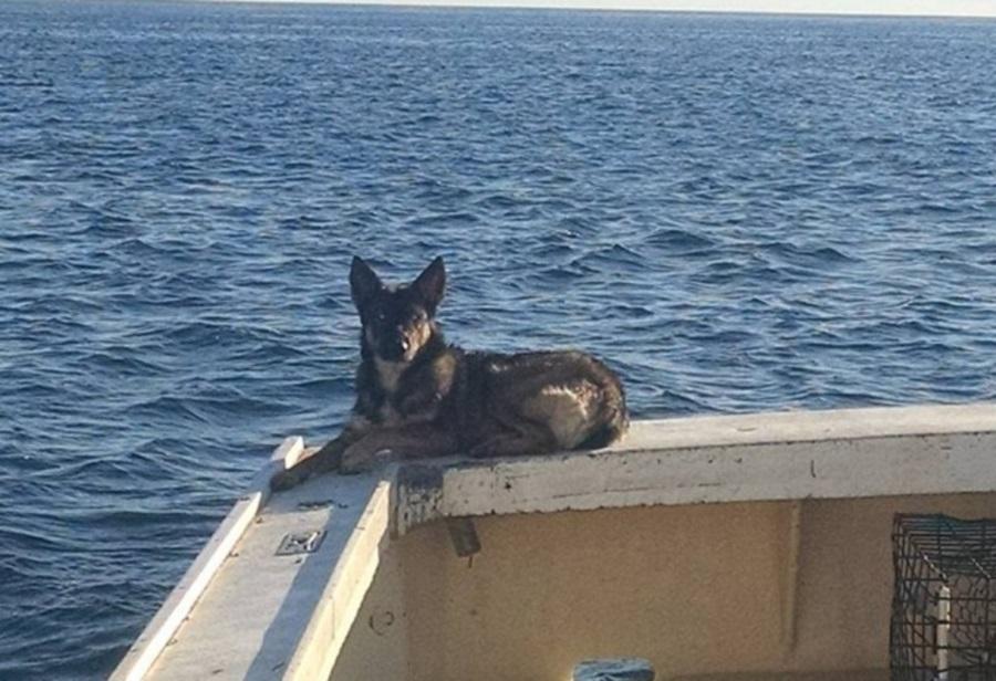 lost dog at sea