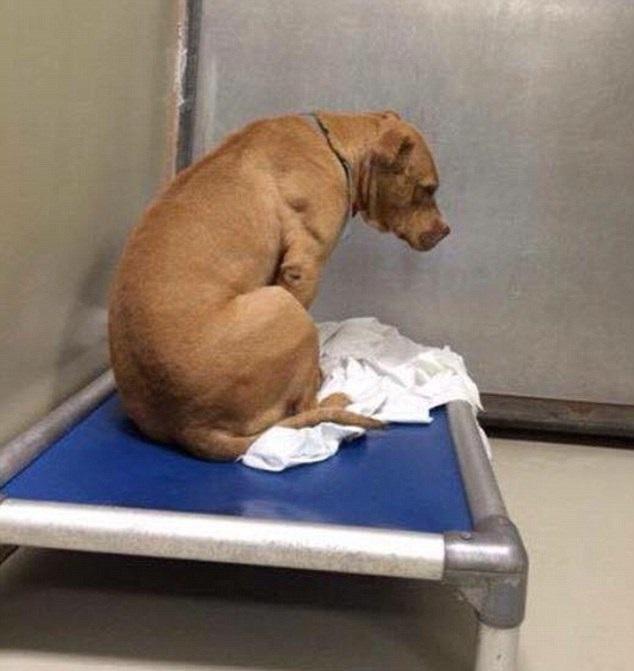 Depressed dog