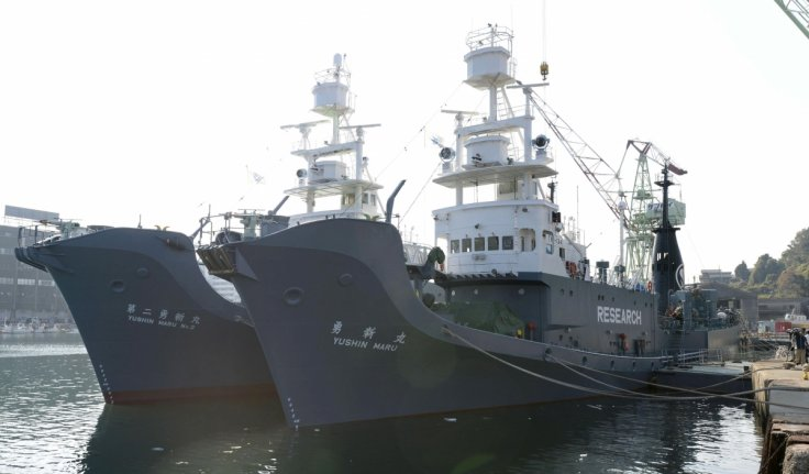 Japan whaling fleet returns