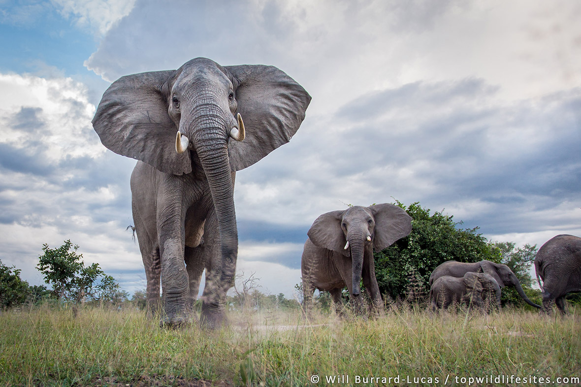 Top Wildlife Sites of the World