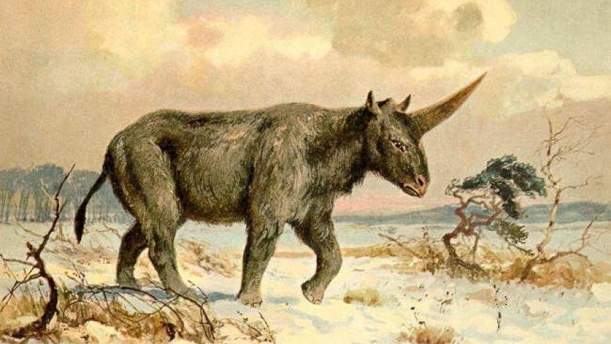 Elasmotherium sibiricum Siberian rhino unicorn