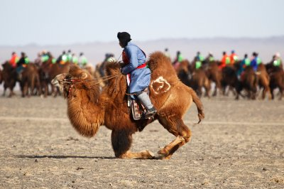 Temeenii bayar camel festival