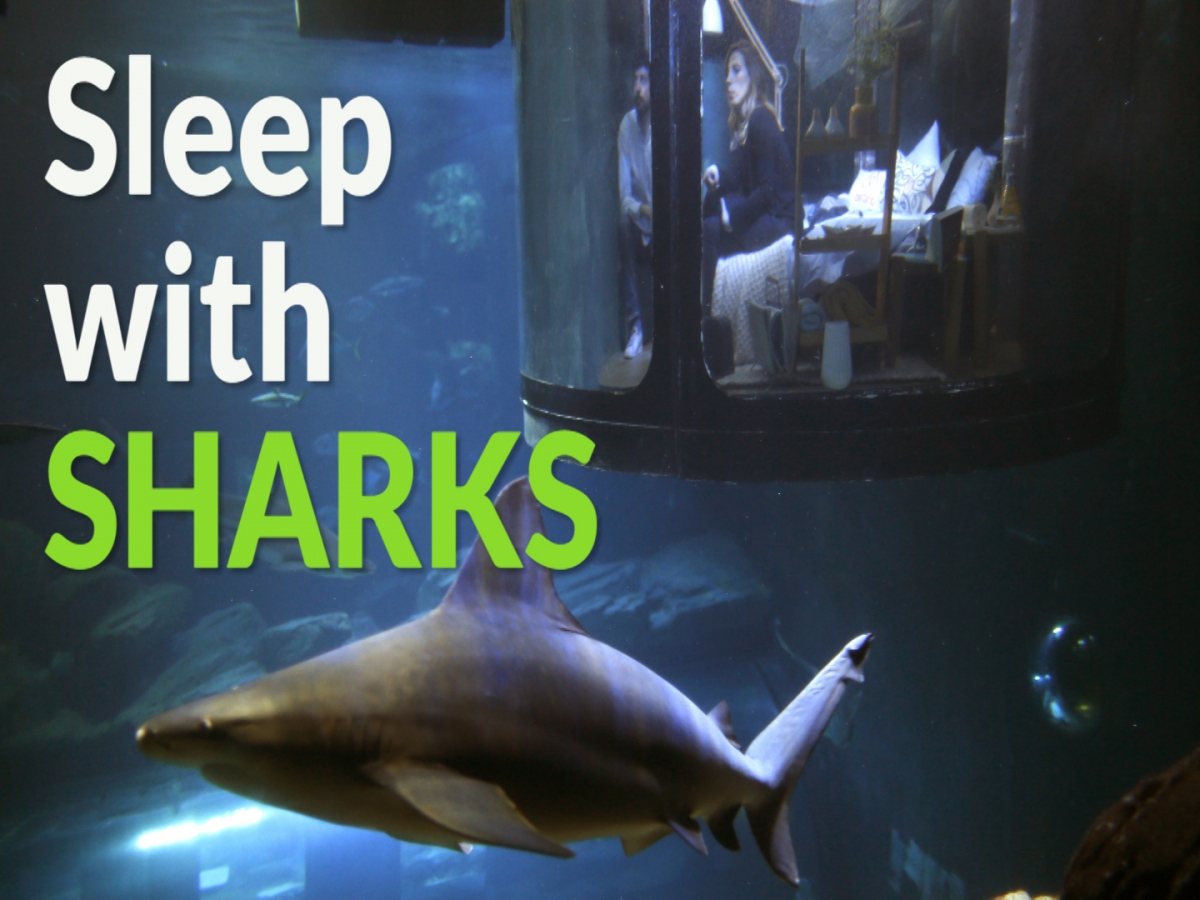 sleep surrounded by sharks