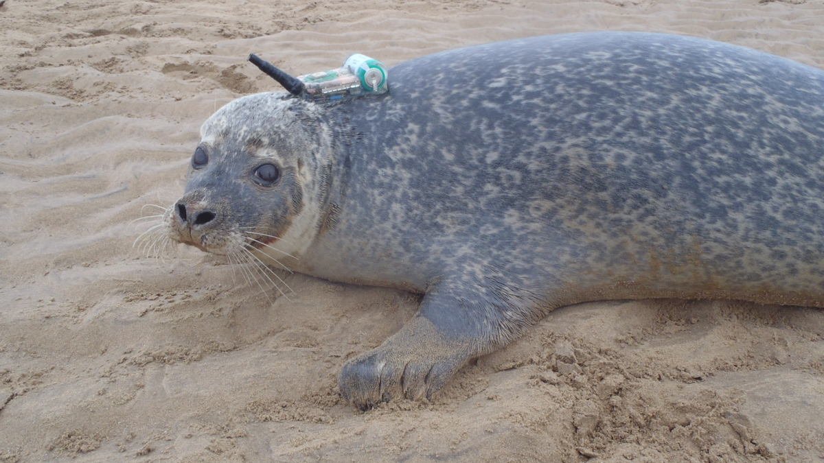 connected seal