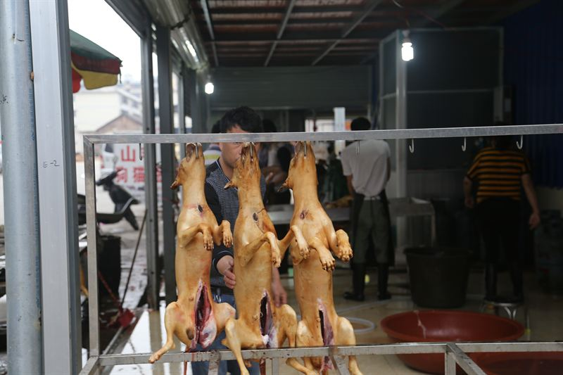 Hanging slaughtered dogs