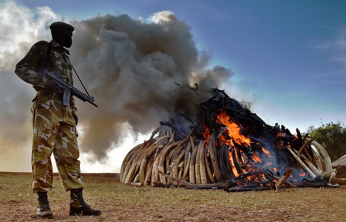 Kenya Ivory