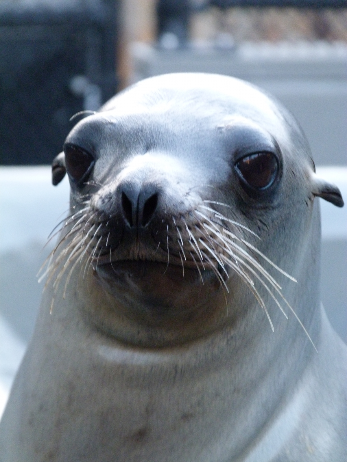 School Daze the stranded sea lion pup