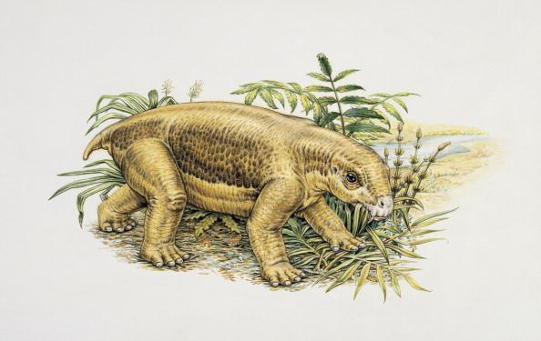 animal species Lystrosaurus