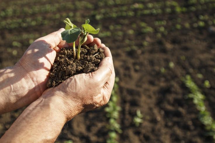 farmer farming
