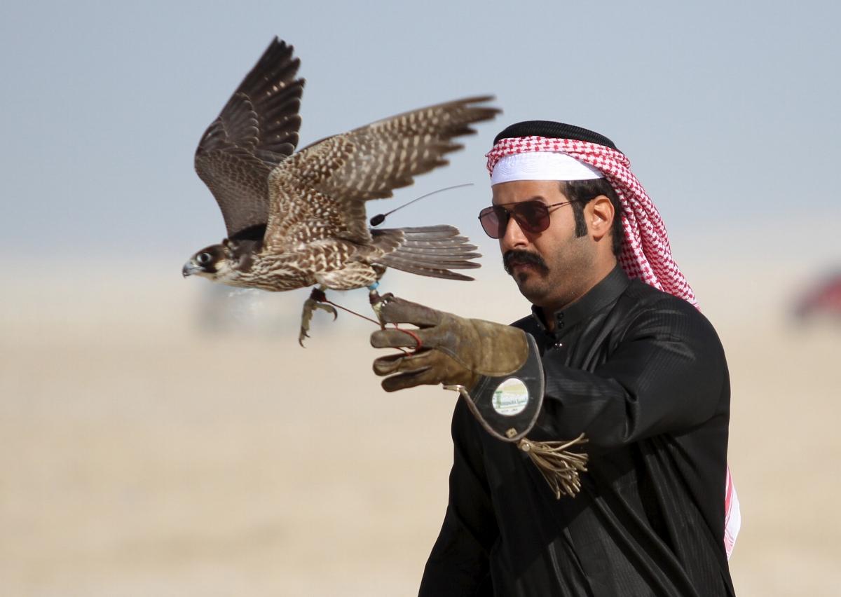 A Qatari man releases his falcon