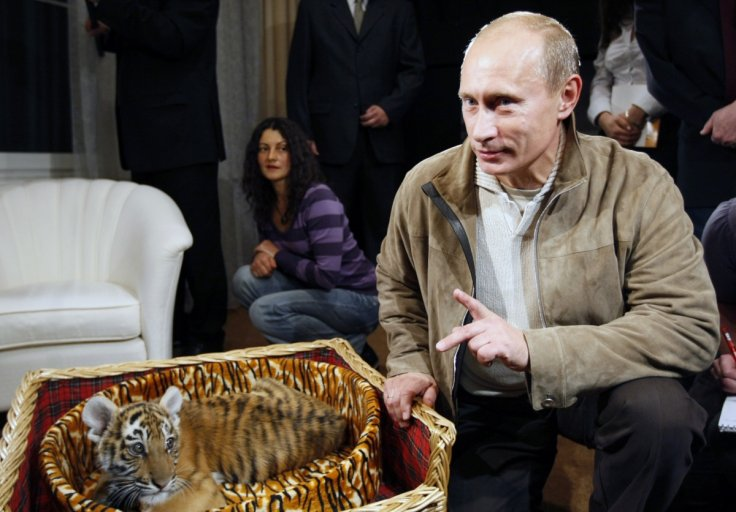 Putin with a tiger