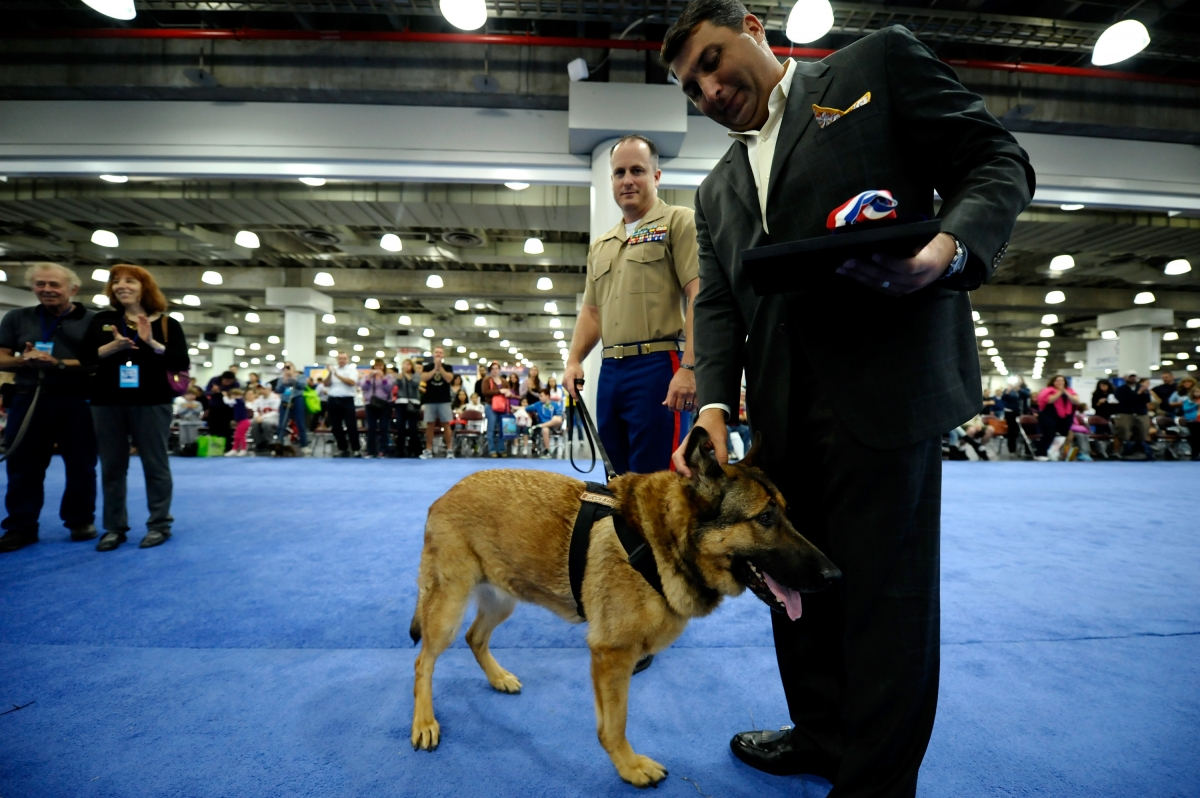 Lucca the marine dog in New York