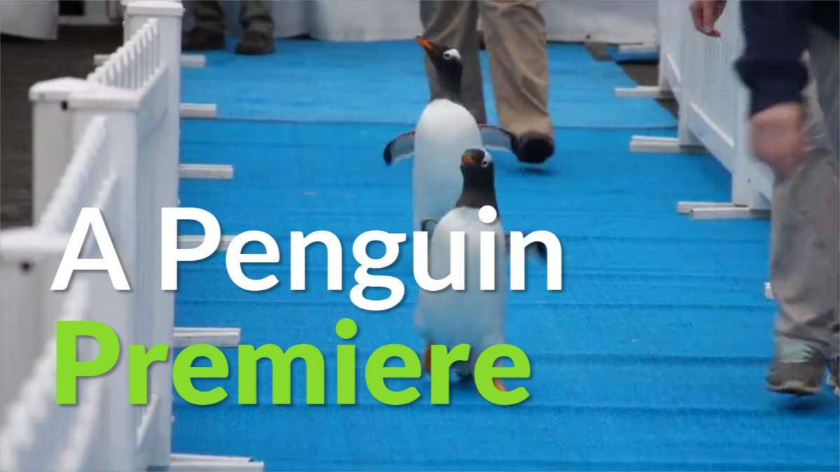 Penguins blue carpet