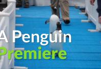 Penguins blue carpet