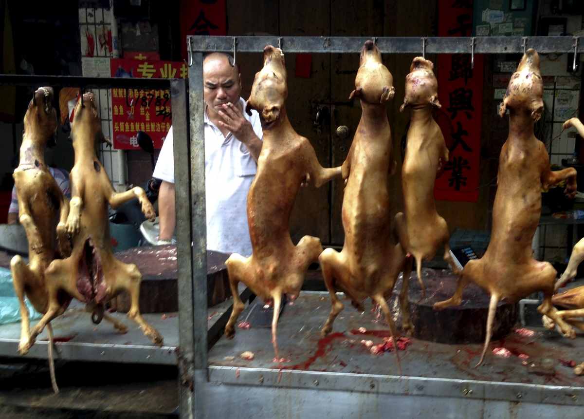 Yulin dog meat festival: Activists rescue 1,000 dogs from ... - photo#41