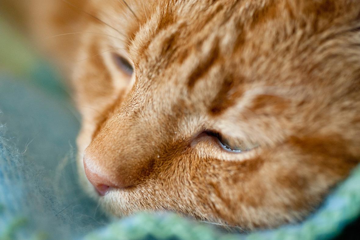 Croydon cat ripper