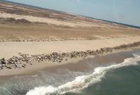 Thousands of seals