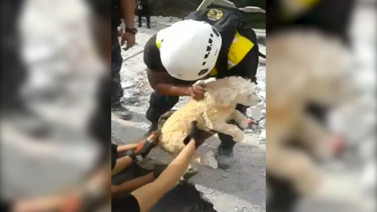 Ecuador: Emergency workers rescue dog from rubble