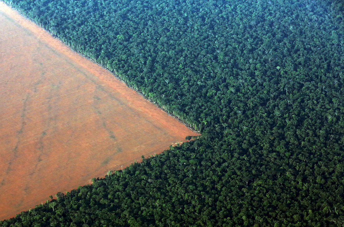Earth Day 2016 Photos Show How Our Tropical Rainforests
