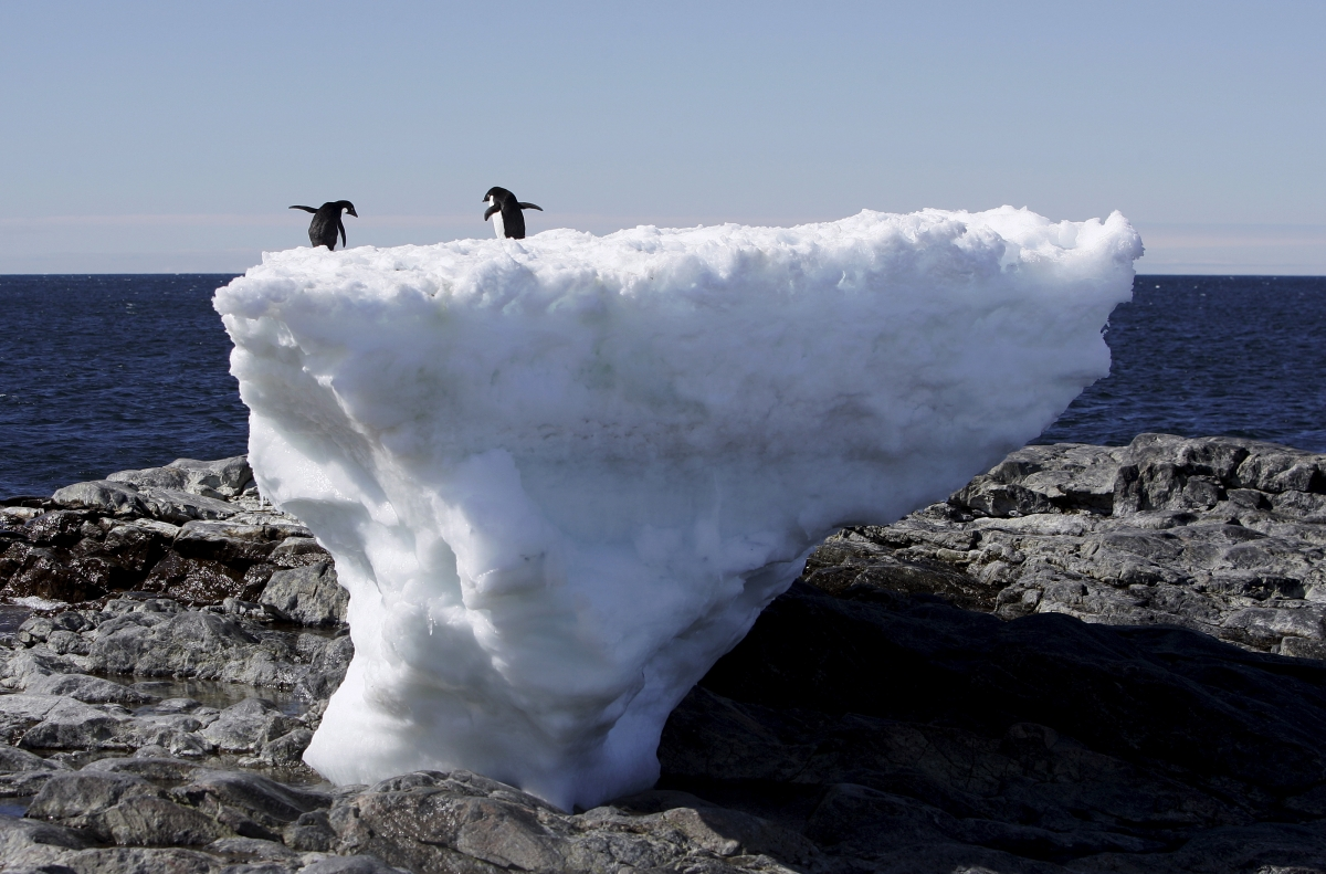 Penguins on a melting ice block