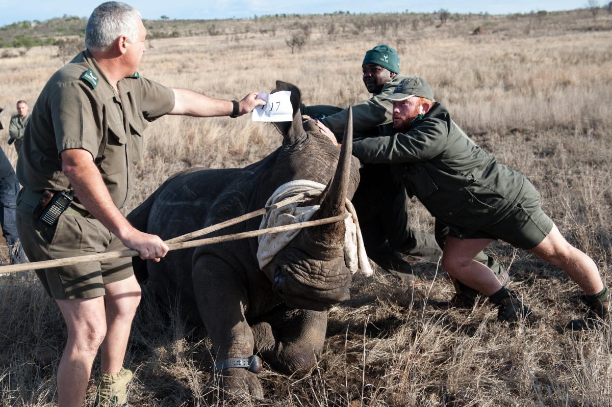 Connected conservation for rhinos in South Africa