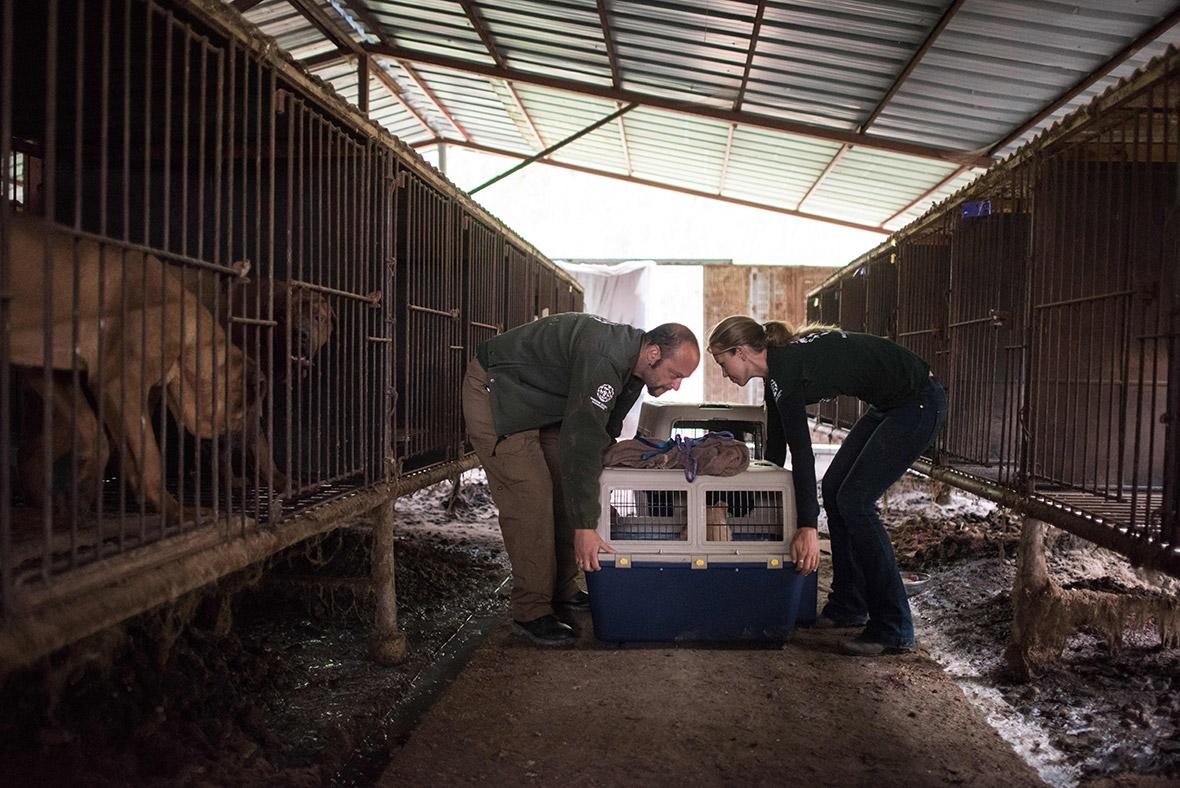 Korea dog meat farm