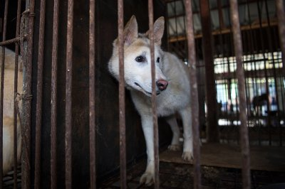 Korea dog farm rescue