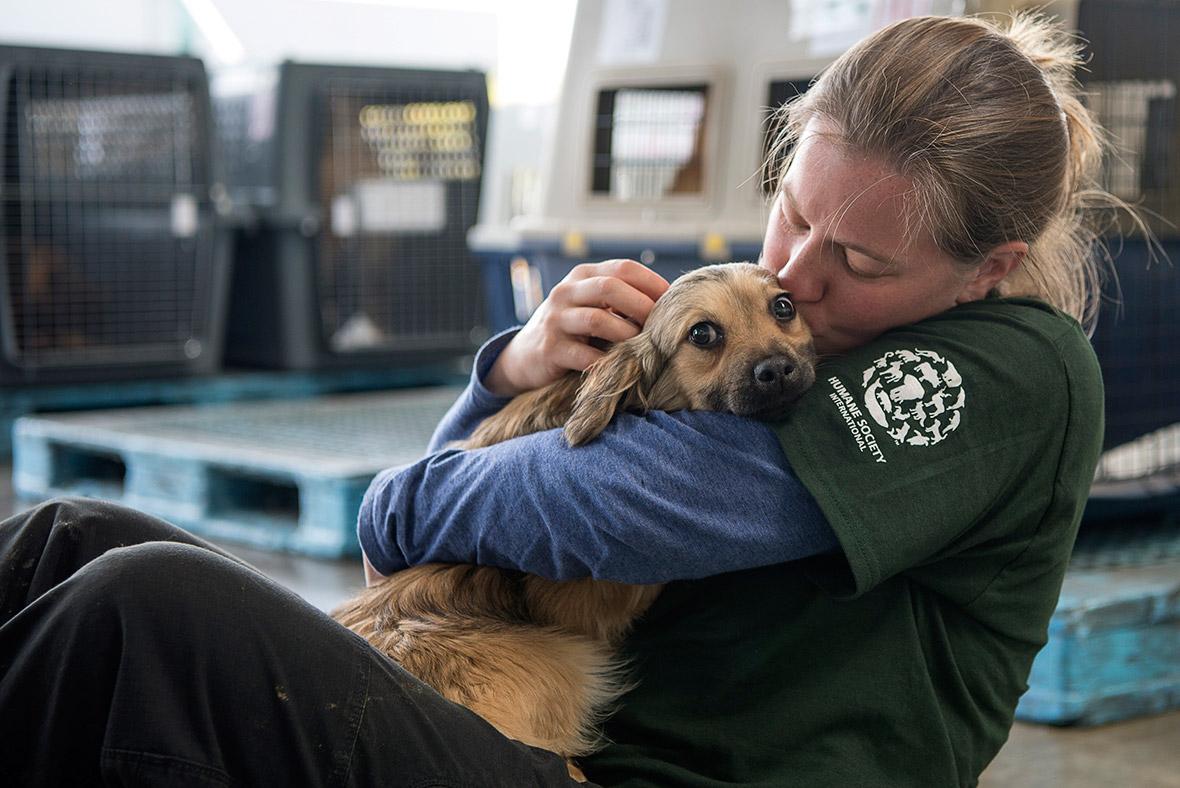 Korea dog farm rescue