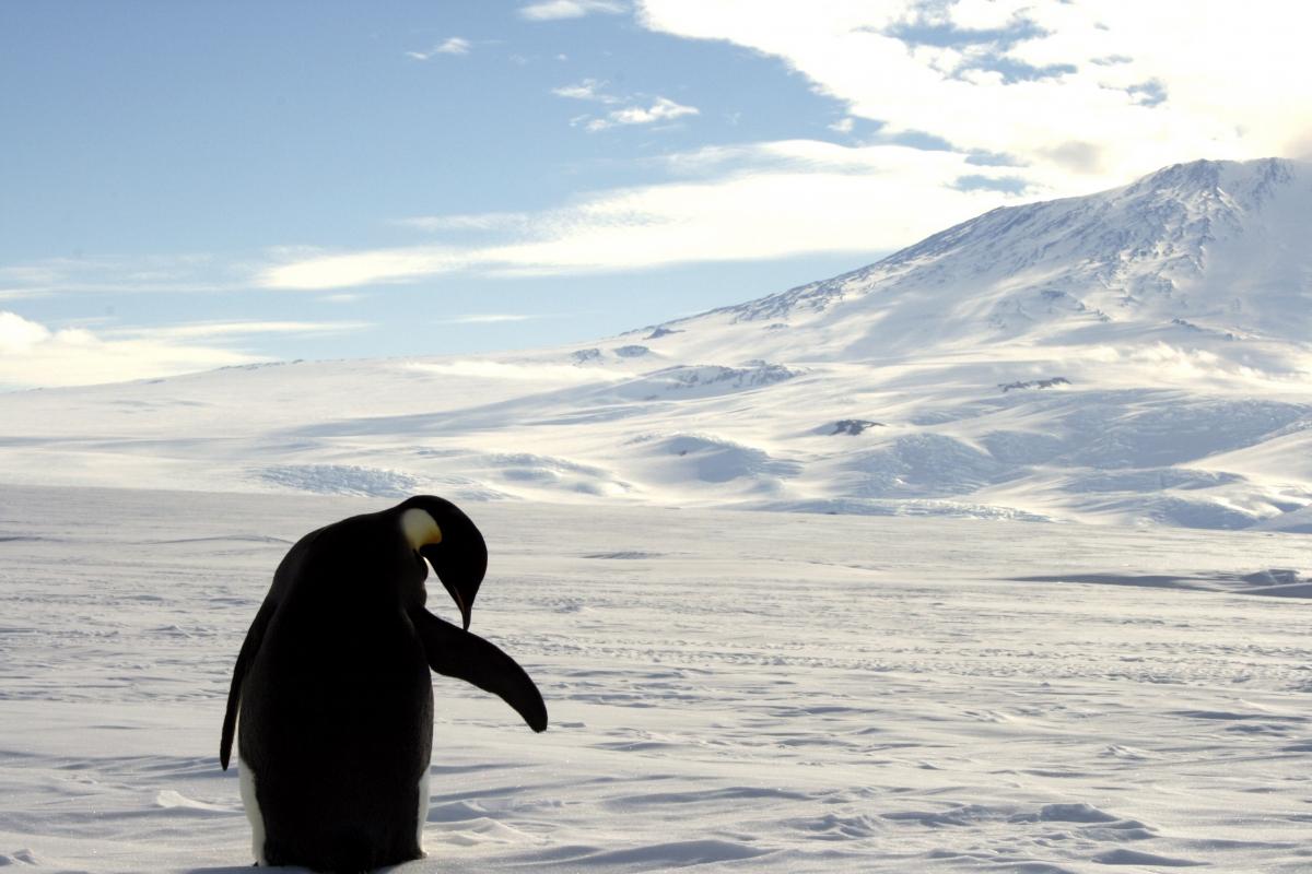Tallest penguin alive
