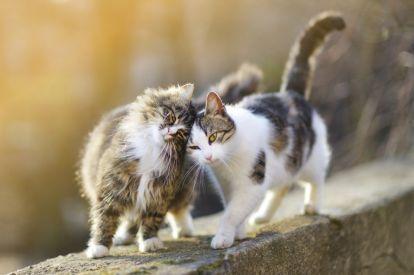 Cats walk side by side