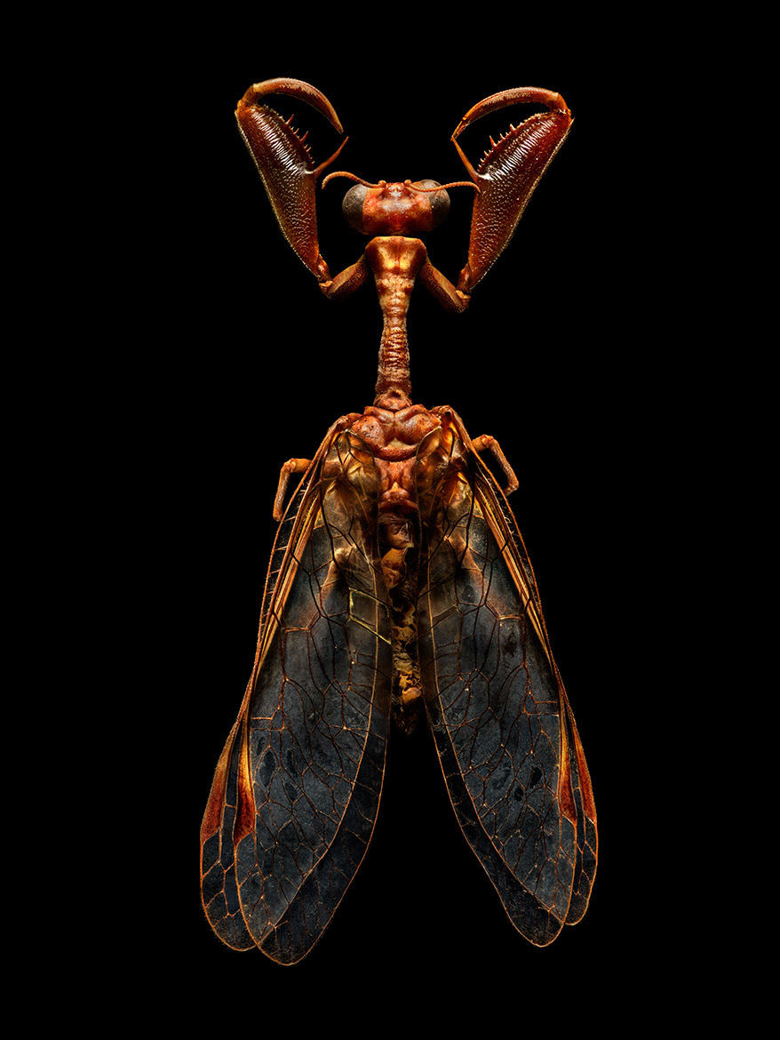 Enormous images of tiny insects, each made from around 8,000 individual photos